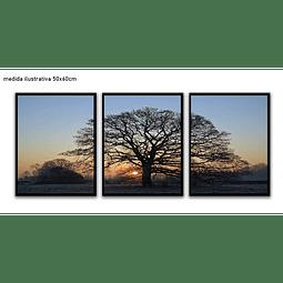 Trio de Quadros Separados  Kelly - Alteração de valores por medidas