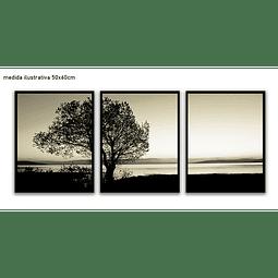 Trio de Quadros Separados  Ashes - Alteração de valores por medidas