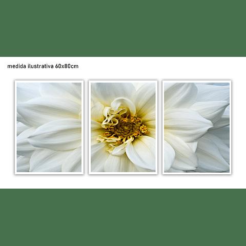 Trio de Quadros Separados  Browse  - Alteração de valores por medidas