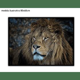 Quadro Matias - Alteração de valores por medidas