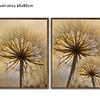 Conjunto de Quadros Separados Dandelion  - Alteração de valores por medidas