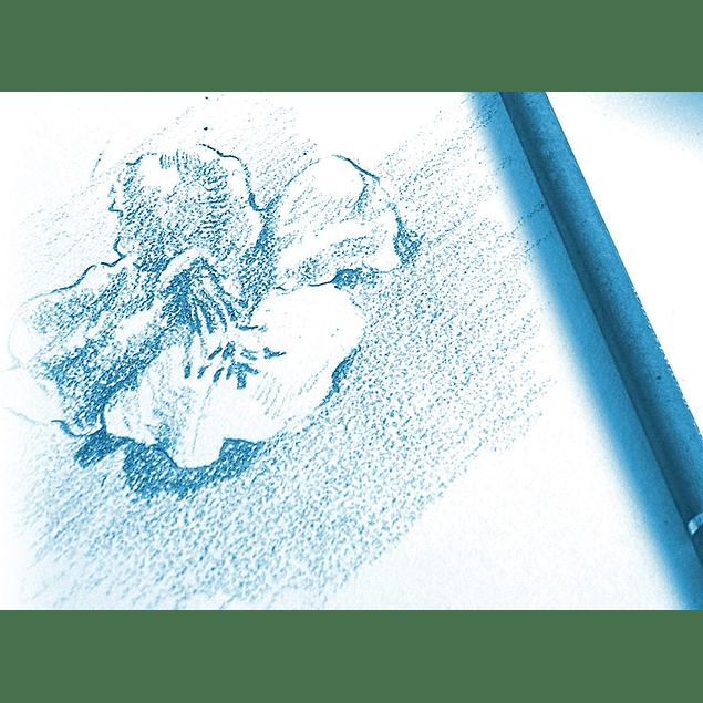 Bloc Anillado Dibujo