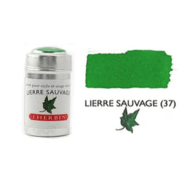 Cilindro - Lierre Sauvage (37)