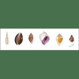 Colección de Caracolas