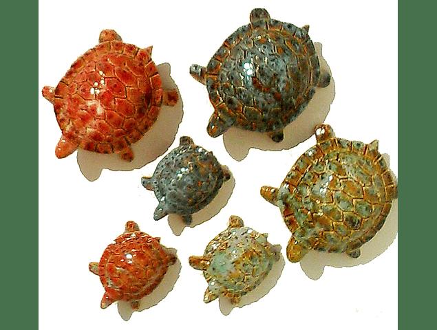 Tartaruga media e pequenas