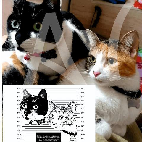 T-Shirt Personalizada com os seus gatos