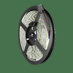 WTI-002 TIRA 300 LEDS 5050 5M 72W IP65 RGB