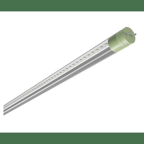 MAGG F5146-030 LAM T8 LED 16W 100-240V 60K TR (BASICO)