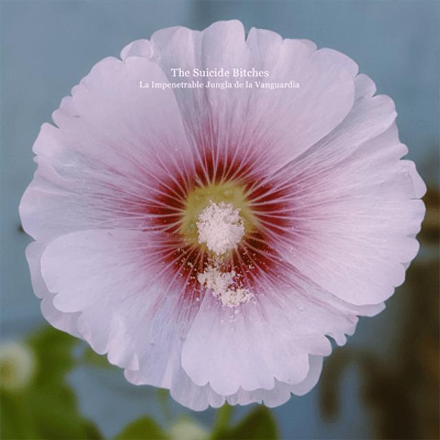 The Suicide Bitches - La Impenetrable Jungla de la Vanguardia (CD)