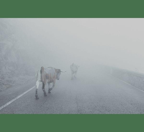 Invierno en Asturias II