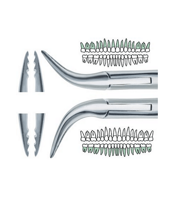 Upper & Lower Atraumatic Extraction Root Forceps With