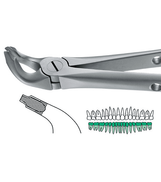 Salvin Atraulux Extraction Forcep #8