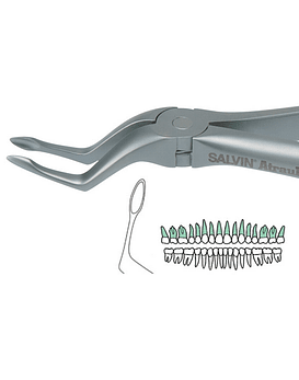 Salvin Atraulux Extraction Forcep #6