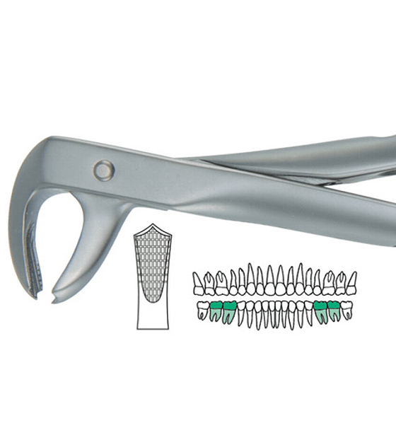 Salvin Atraulux Extraction Forcep #7