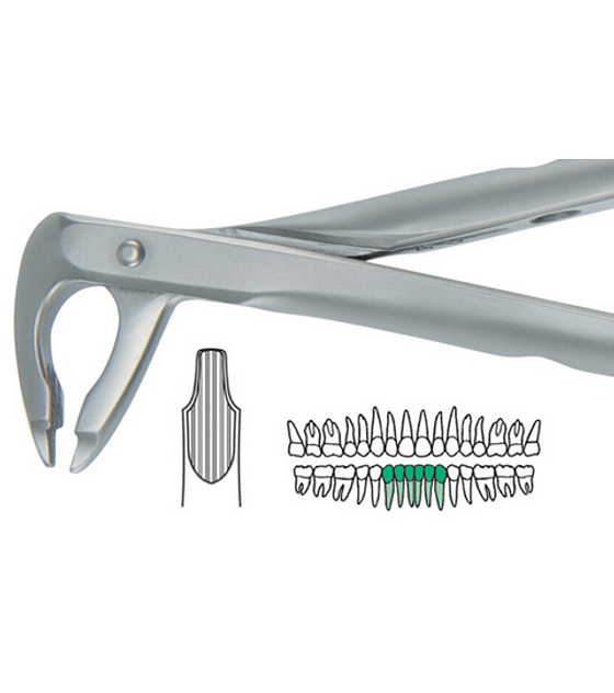 Salvin Atraulux Extraction Forcep #2