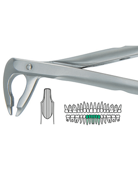 Salvin Atraulux Extraction Forcep #4