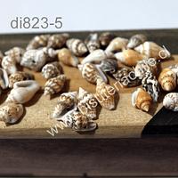 Conchitas color crema, 13 mm de largo y 5 mm de ancho aprox. cada una, set de 30 grs. aprox.