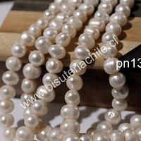 Perla de río de 8 mm, tira de 48 perlas aprox.