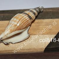 Colgante de Caracola natural con bordes plateados, 58 mm de largo x 23 mm de ancho, por unidad