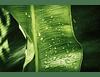 Botanic I