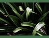 Botanic IV