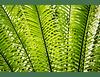 Entre Verdes III