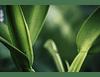 Entre Verdes IV