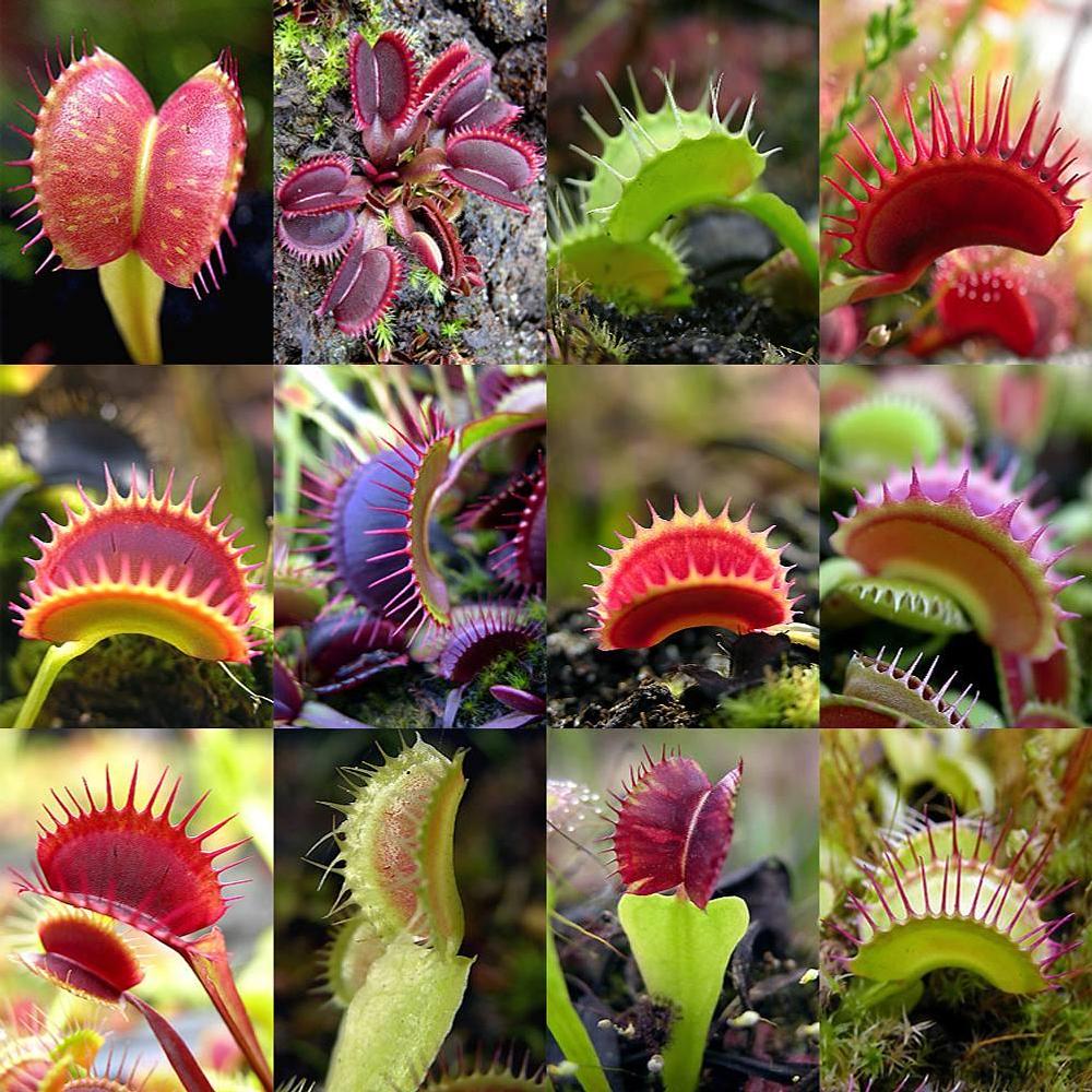 Mix Especies I