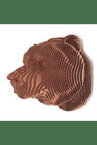 HEAD BEAR