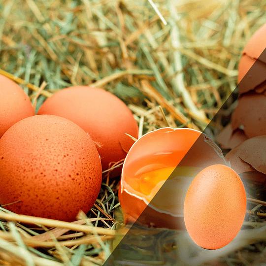 Huevo Super Extra Color 20 Un