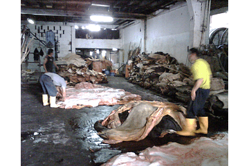 How the leather is slowly killing people and places where factory