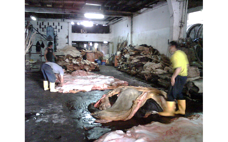 How leather is slowly killing people and the places where it is made