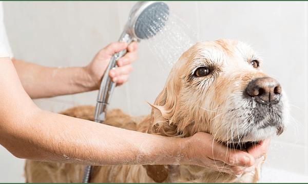 Los beneficios de la avena para tu mascota