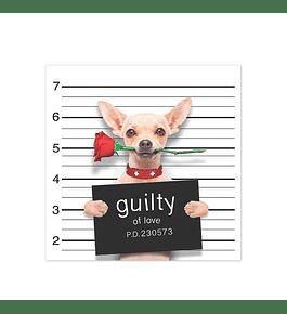 Bad Chihuahua in Love