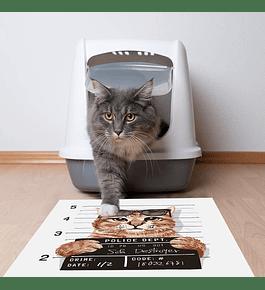 Bad Cool Cat