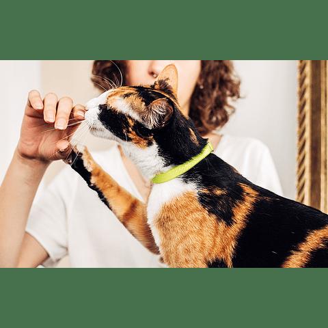 ZEE.CAT NEOPRO LIMA CAT COLLAR