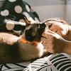 ZEE.CAT NEOPRO TANGERINE CAT COLLAR