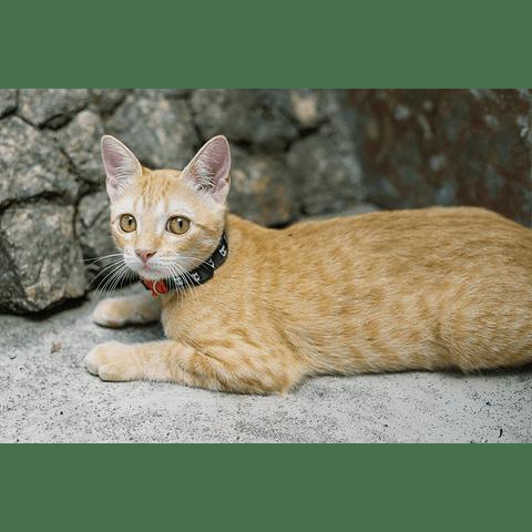 ZEE.CAT SKULL CAT COLLAR