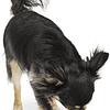 Planet Dog  Frambuesa