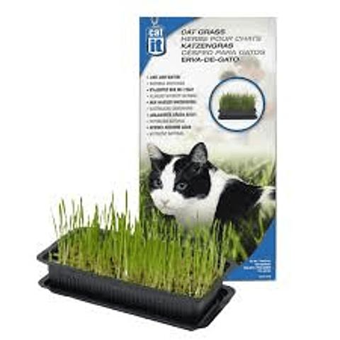 Cat It Pasto Para Gatos