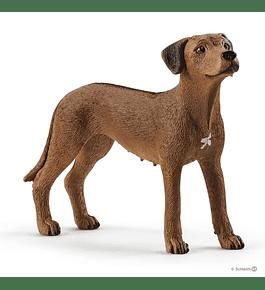 Cão da Rodésia