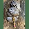 Descamador de pescados Japones
