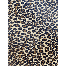 Baby Leopardo