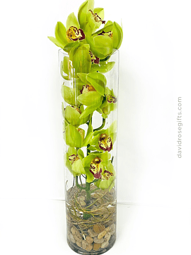 Orquídea Elegance