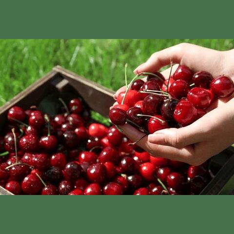 saborizante cherry