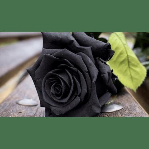 Hidrolato Rosa Negra