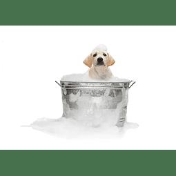Shampoo de perritos