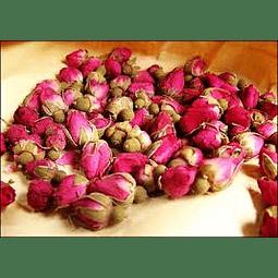 Capullito de rosa rubiginosa