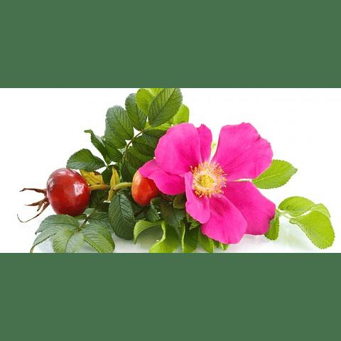 Extracto rosa mosqueta