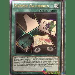 Flower Gathering - DRL3-EN040 - Ultra Rare 1st Edition